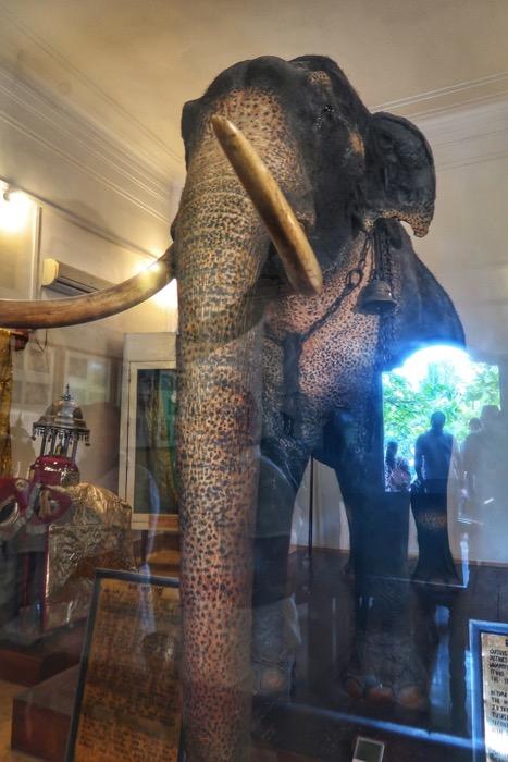 Elefantul Raja, Templul Dintelui Sri Lanka