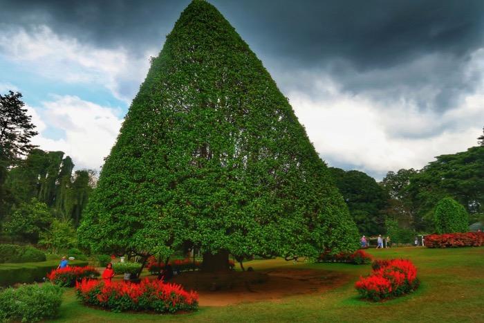 Grădina BotanicăPeradeniya Kandy 11