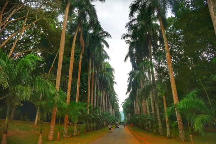 Grădina BotanicăPeradeniya Kandy 9