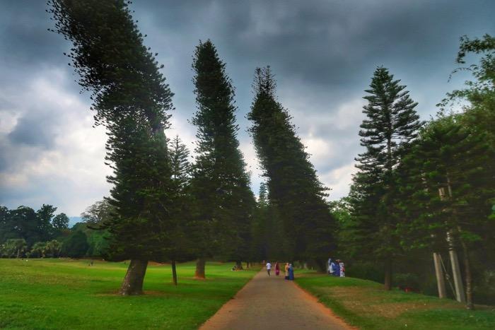 Grădina BotanicăPeradeniya Kandy 8