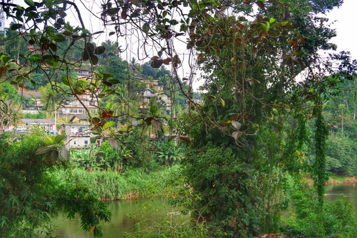 Grădina BotanicăPeradeniya Kandy 7