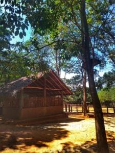 Pinnawala Sri Lanka 1