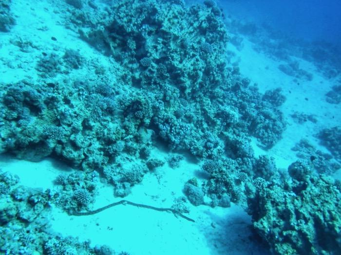 corali aqaba iordania