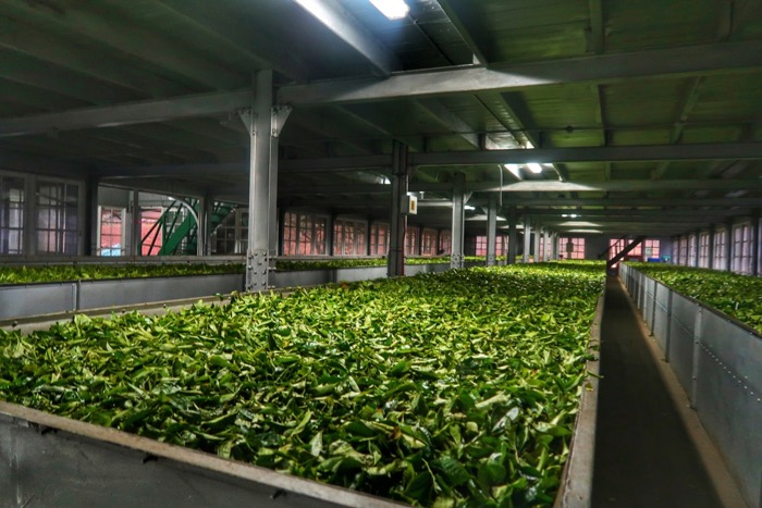 Pantatii ceai Sri Lanka