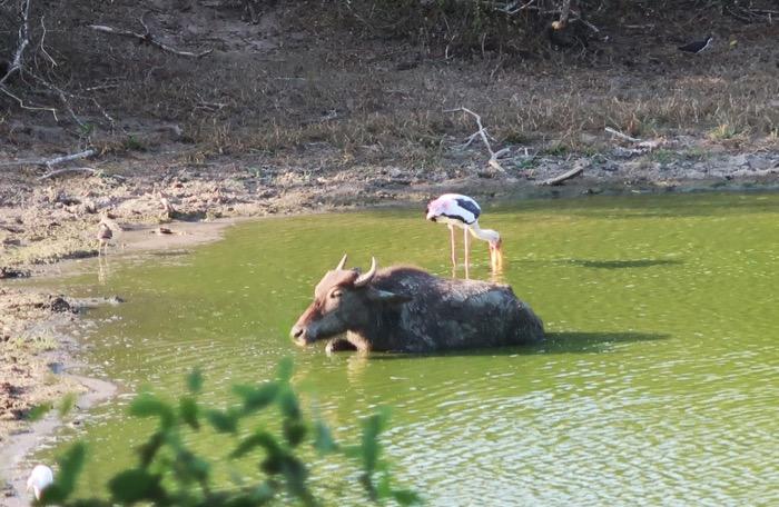 Parcul Național Yala 8