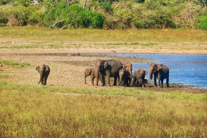 Parcul Național Yala 7