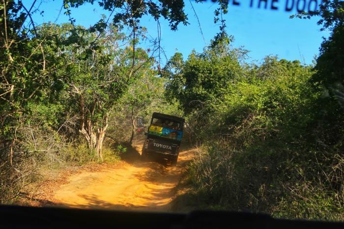Parcul Național Yala 6