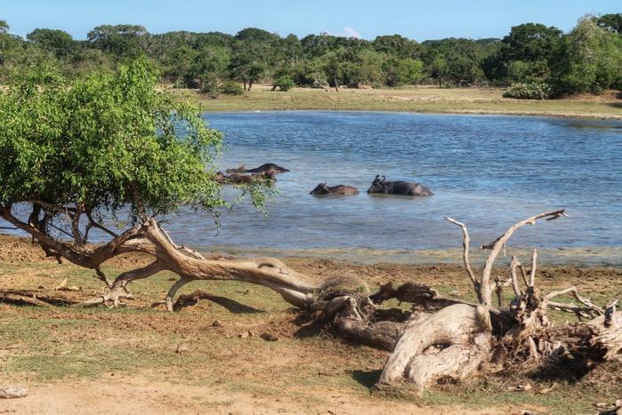 Parcul Național Yala 3