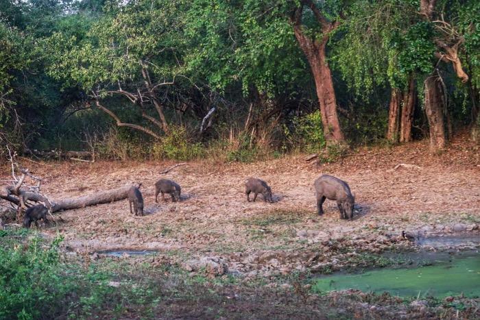 Nuwara Eliya, cascada Ravana Parcul Național Yala Hotel EKHO Safari 4 29