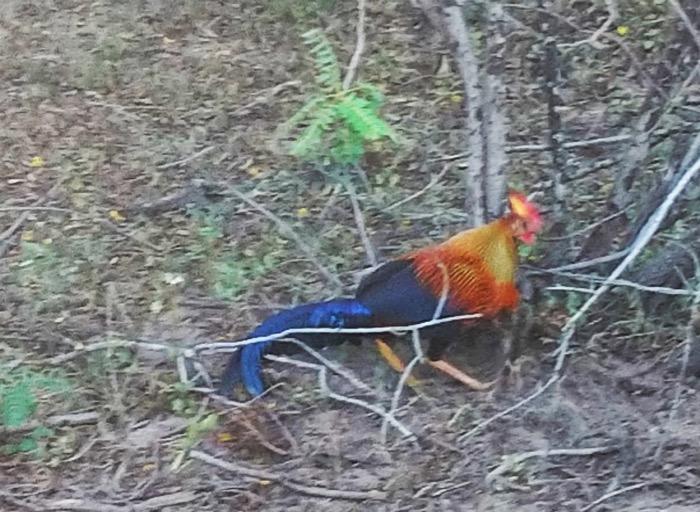 Nuwara Eliya, cascada Ravana Parcul Național Yala Hotel EKHO Safari 4 22