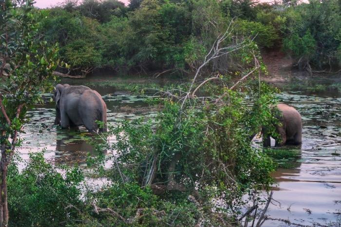 Nuwara Eliya, cascada Ravana Parcul Național Yala Hotel EKHO Safari 4 20