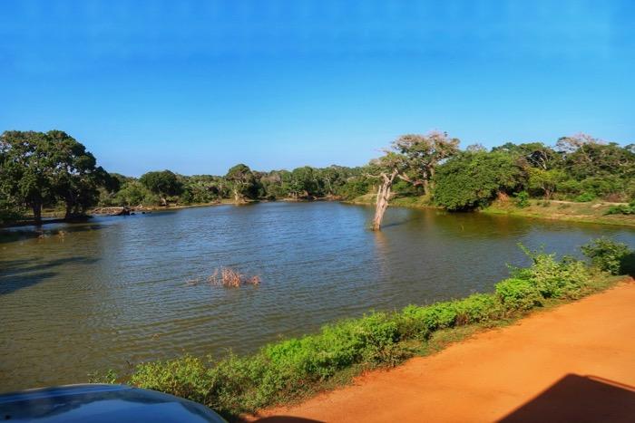 Parcul Național Yala 11