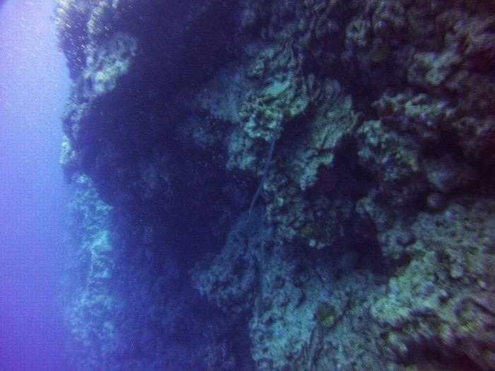 Advanced Open Waters Dahab Scufundari 15
