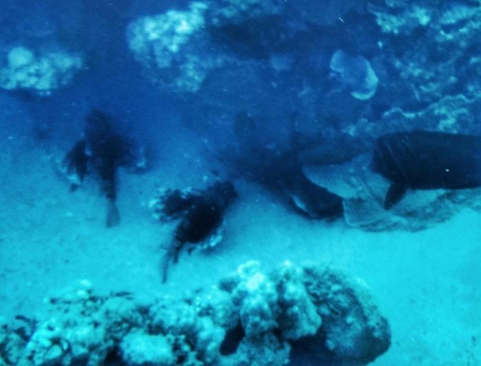 Advanced Open Waters Dahab Scufundari 34