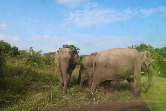 Hurulu Sri Lanka 3