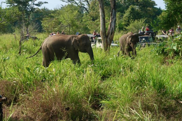 Hurulu Sri Lanka 9