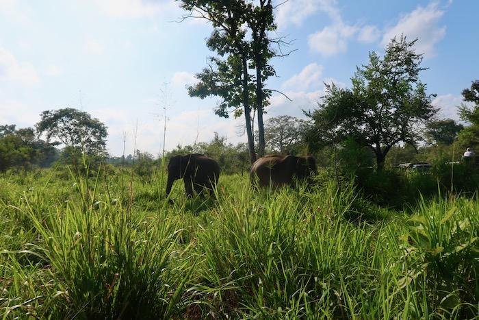 Hurulu Sri Lanka 8