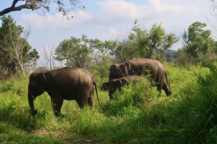 Hurulu Sri Lanka 7