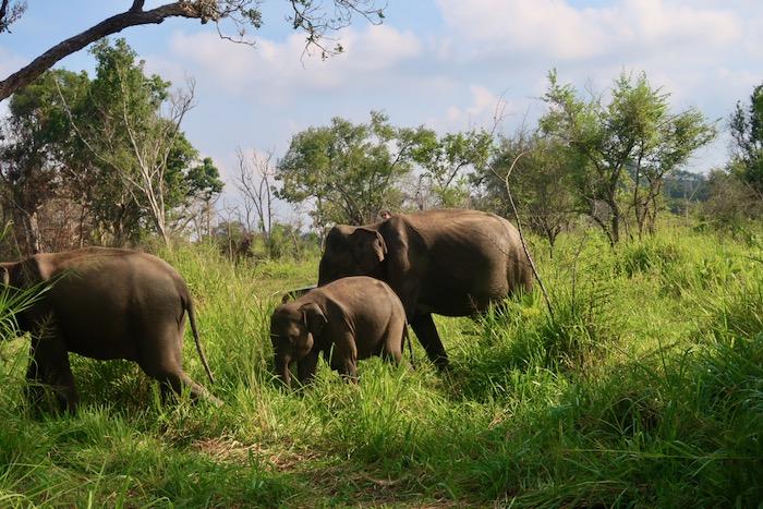 Hurulu Sri Lanka 6