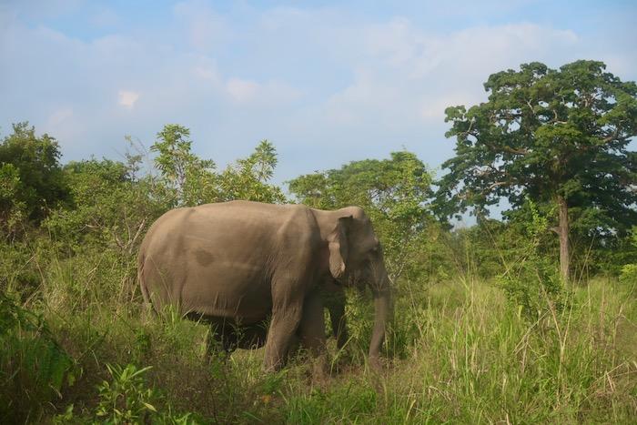 Hurulu Sri Lanka 5