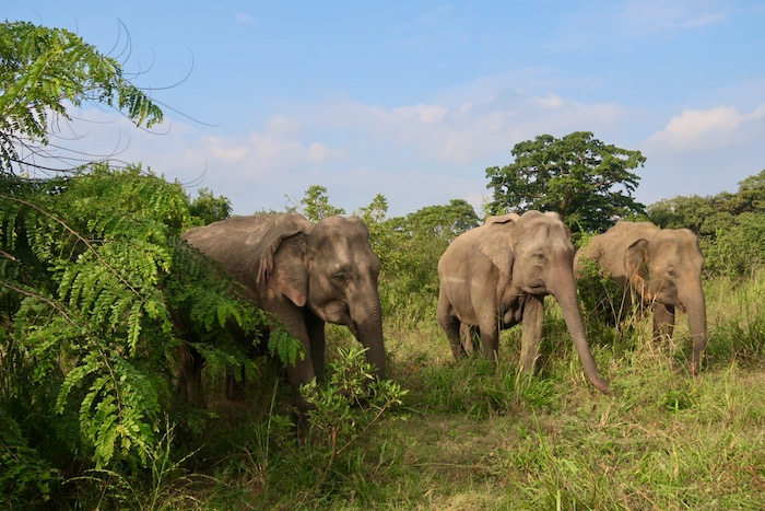 Hurulu Sri Lanka 4